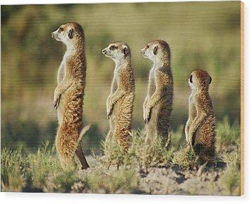 Meerkat Stairsteps Wood Print