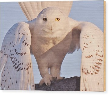 Meet Roofus Wood Print by Elaine Franklin