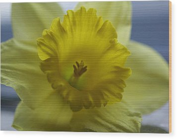 Mellow Yellow Wood Print by Patricia M Shanahan