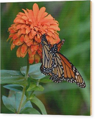 Menage Of Monarchs Wood Print