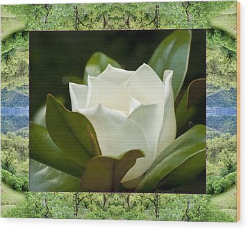 Wood Print featuring the photograph Mendocino Magnolia by Bell And Todd