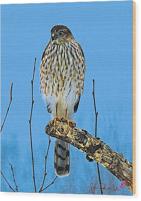 Merlin    Not The Majician Wood Print by John Selmer Sr