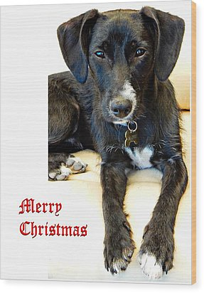 Merry Christmas Dog Wood Print by Dorothy Berry-Lound