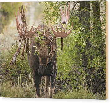 Wood Print featuring the photograph Messy Moose by Mary Hone
