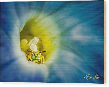 Metallic Green Bee In Blue Morning Glory Wood Print by Rikk Flohr