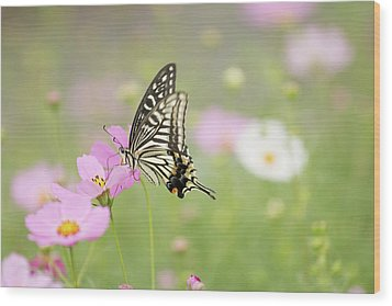 Mexican Aster With Butterfly Wood Print