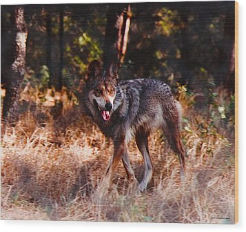 Mexican Red Wolf Wood Print by DiDi Higginbotham