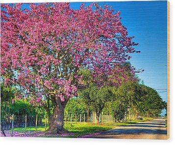 Miami's Fall Colors Wood Print