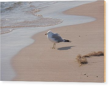 Wood Print featuring the photograph Michigan Seagull  by Beth Akerman