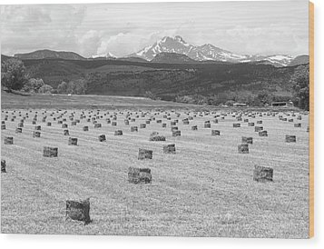 Mid June Colorado Hay  And The Twin Peaks Longs And Meeker Bw Wood Print by James BO  Insogna