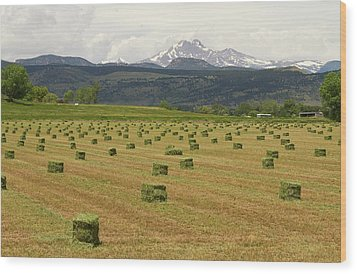 Mid June Colorado Hay  And The Twin Peaks Longs And Meeker Wood Print by James BO  Insogna