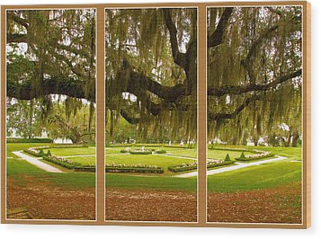 Wood Print featuring the photograph Middleton Gardens Triptych by Bill Barber