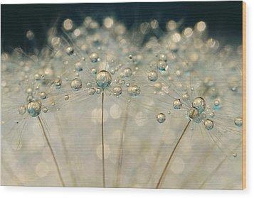 Midnight Blue Dandy Sparkle Wood Print