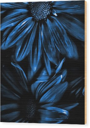 Midnight Blue Gerberas Wood Print by Bonnie Bruno