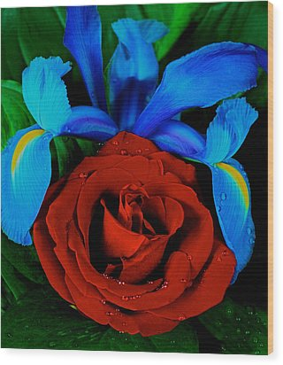 Midnight Blue Iris And A Red Rose Wood Print by Leslie Crotty