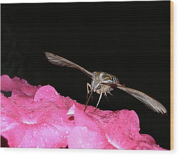 Midnight Hummer Wood Print