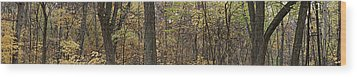 Wood Print featuring the photograph Midwest Forest by Robert Harshman