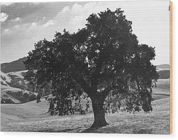 Mighty The Oak Wood Print
