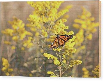 Migrating Monarch Butterfly Moses Cone Memorial Park North Carolina Wood Print by Mark VanDyke