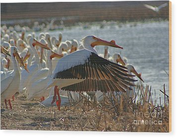 Migrating Pelicans  Wood Print by Shari Morehead