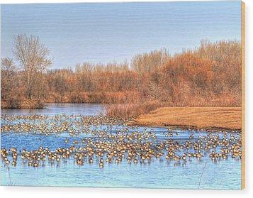 Migration Break On Ice Wood Print