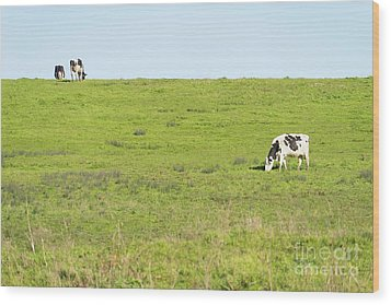 Wood Print featuring the photograph Milk Cow At Point Reyes National Seashore California Dsc4882 by Wingsdomain Art and Photography