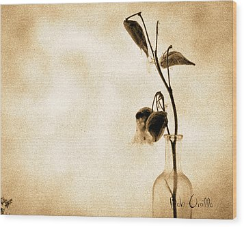 Milk Weed In A Bottle Wood Print by Bob Orsillo