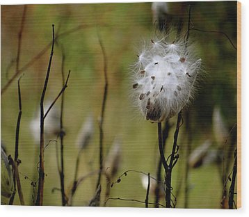 Milkweed In A Field Wood Print