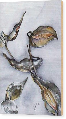 Milkweed In Winter Wood Print