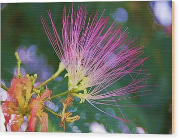 Mimosa Fairy Wood Print by Beverly Hammond