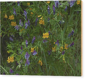 Mimulus And Vetch Wood Print by Doug Herr