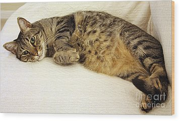 Ming Resting On The Couch Wood Print