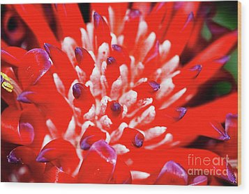 Wood Print featuring the photograph Flaming Torch Bromeliad By Kaye Menner by Kaye Menner