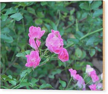 Mini Roses Wood Print by John Parry