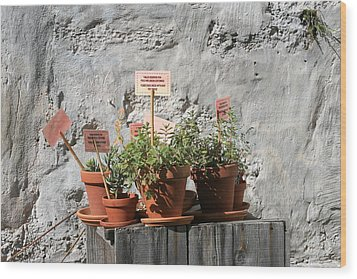 Wood Print featuring the photograph Miniature Plants For Sale by Shirin Shahram Badie