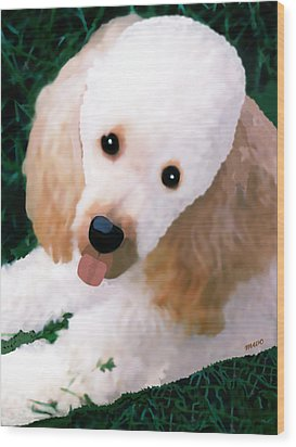 Miniature Poodle Albie Wood Print by Marian Cates