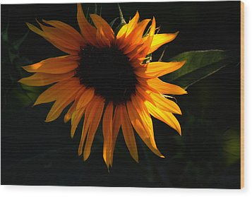 Miniature Sunflower Wood Print by Martin Morehead
