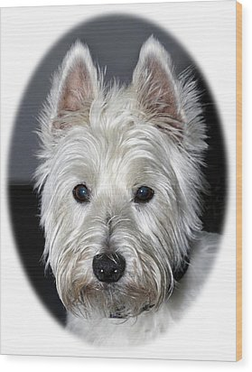 Mischievous Westie Dog Wood Print
