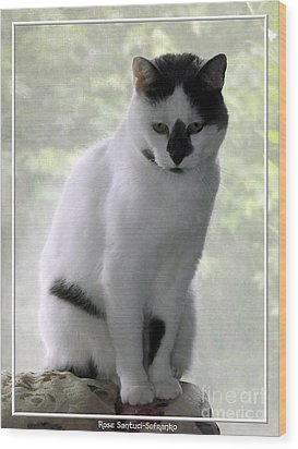 Miss Jerrie Cat With Watercolor Effect Wood Print by Rose Santuci-Sofranko