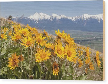 Mission Mountain Balsam Blooms Wood Print by Jack Bell