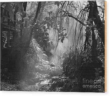 Mist In The Jungle Wood Print