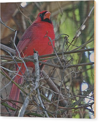 Mister Cardinal Wood Print by DigiArt Diaries by Vicky B Fuller