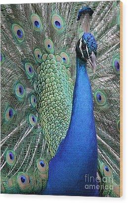 Mister Peacock Wood Print