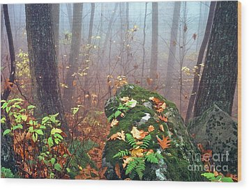 Misty Autumn Woodland Wood Print by Thomas R Fletcher