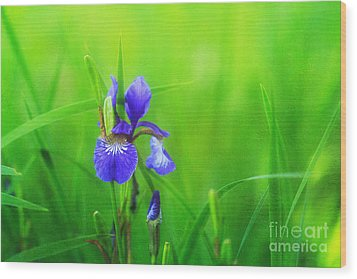 Misty Iris Wood Print by Beve Brown-Clark Photography