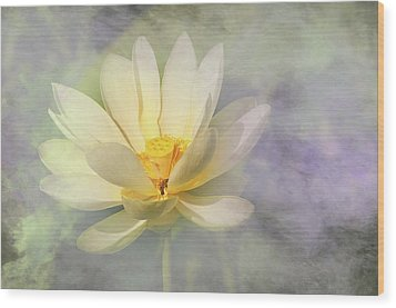 Misty Lotus Wood Print by Carolyn Dalessandro