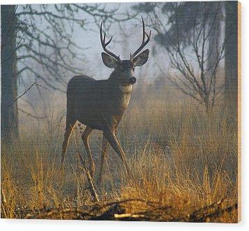 Misty Morning Buck Wood Print by Ben Upham III