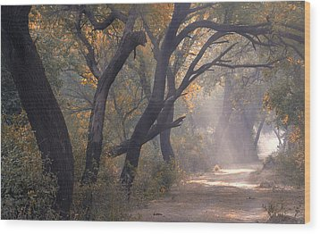 Wood Print featuring the photograph Misty Morning, Bharatpur, 2005 by Hitendra SINKAR