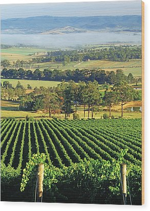 Misty Morning In Yarra Valley Vineyards Near Healesville, Victoria, Australia Wood Print by Peter Walton Photography