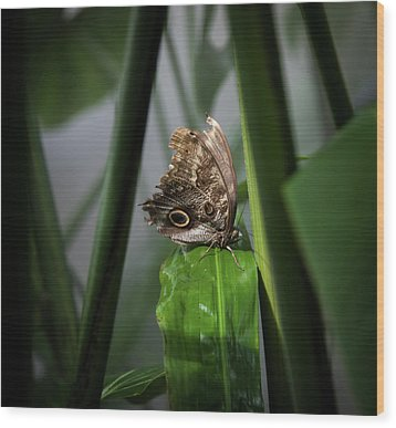 Wood Print featuring the photograph Misty Morning Owl by Karen Wiles